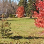Fall Colours in the Courtyard at Big Whiteshell Lodge