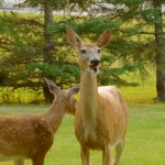 Mom & Bambi at Big Whiteshell Lodge
